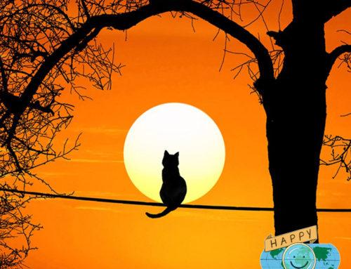 Happy History: Faith the Very Brave Cat